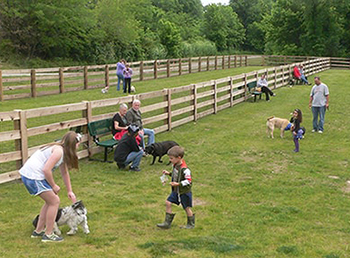 People playing with their pets at the Aurora Dog Park.
